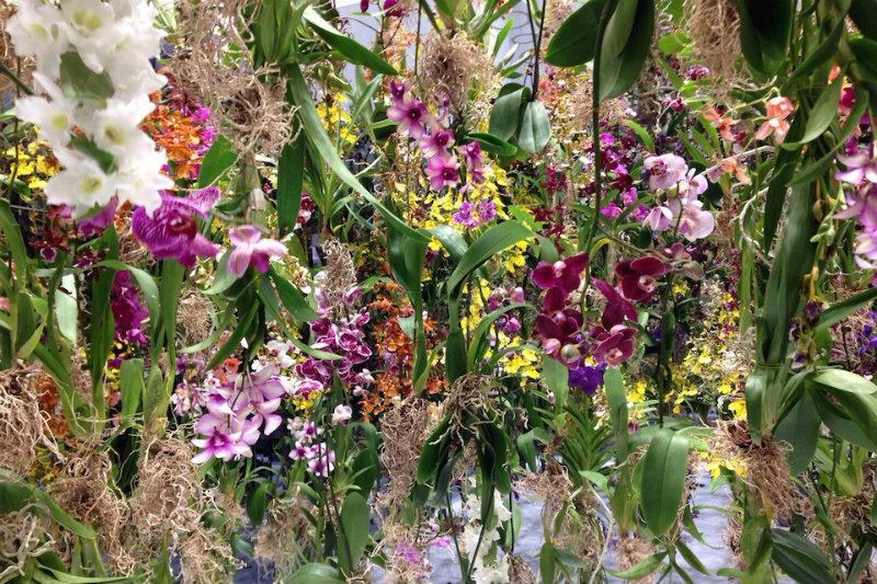Coveted-Floating-Flower-Garden