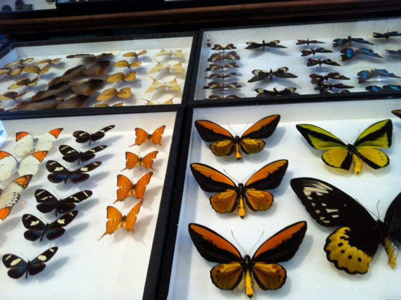 coveted-FontanaArte-at-Masion&Objet-butterflies