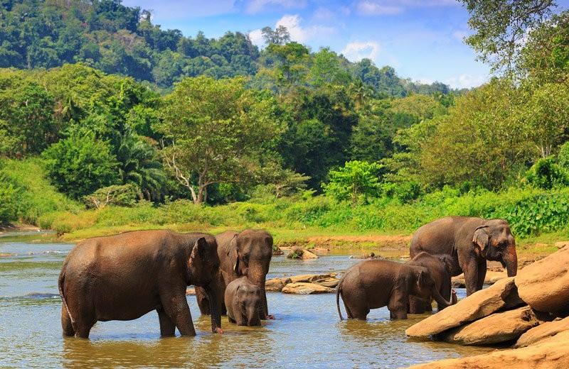 sri-lanka sunny christmas The Best Destinations for a Sunny Christmas Sri Lanka 1