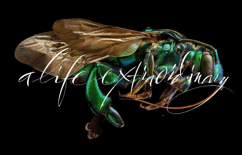 "alifeextraordinarypress isaloni 2017 iSaloni 2017 - Welcome to Moooi's ""A Life Extraordinary"" Exhibition alifeextraordinarypress"